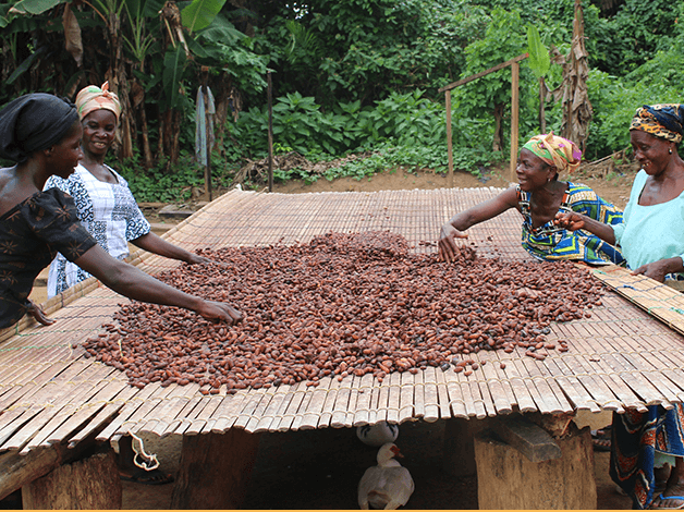 People selecting coco seeds