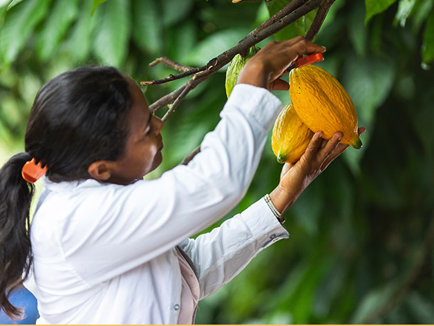 A girl picking coco
